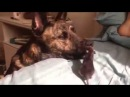 OMG Dog and Mouse best friends Sweet Mouse kissing and play with a Dog