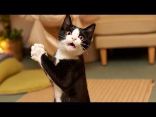 Приколы С Животными!Смешные кошки и коты! Приколы про кошек и котят! Приколы 2016