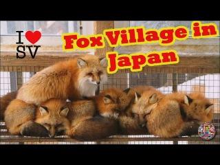 蔵王きつね村 | FOX VILLAGE in Zao Japan ! Funny FOX and cute Video Compilation ! [SV Life]