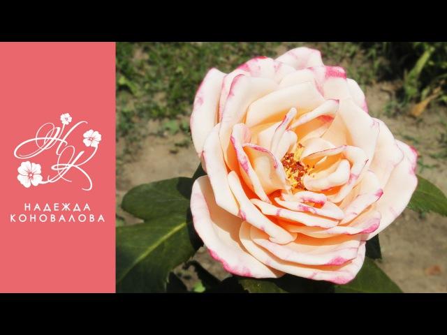Садовая роза из фоамирана по шаблонам с настоящего цветка с тонировкой лепестков акриловыми красками. Автор: Надежда Коновалова