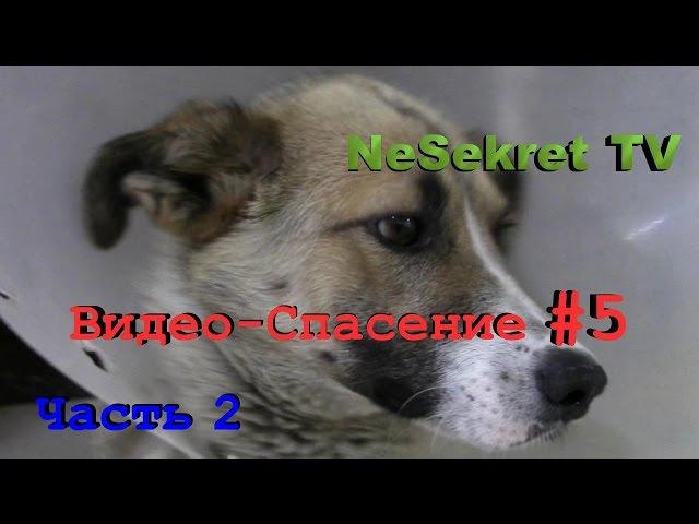 Собака со сломанной лапой. Часть 2. Спасение 5. Город Улан-Удэ