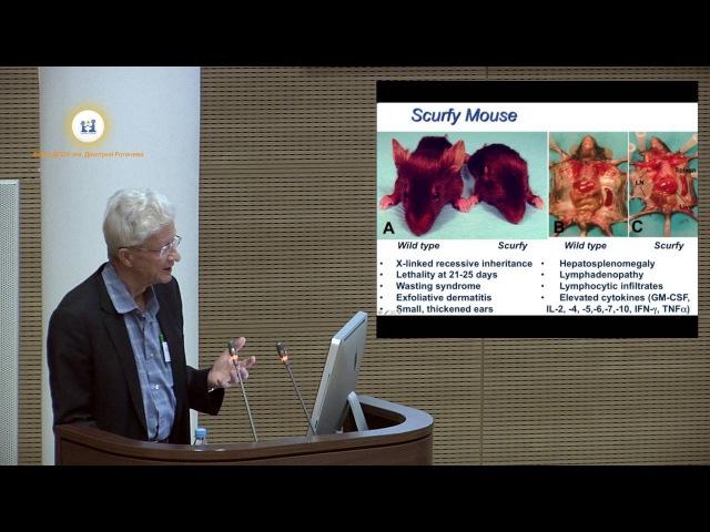 Х Окс Молекулярные основы иммунной дисрегуляции при ПИД