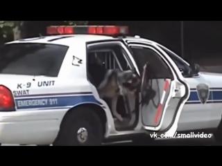 Полицейская ищейка