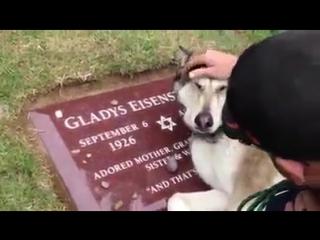 собака плачет за умершим своим хозяином........жалко до слёз..