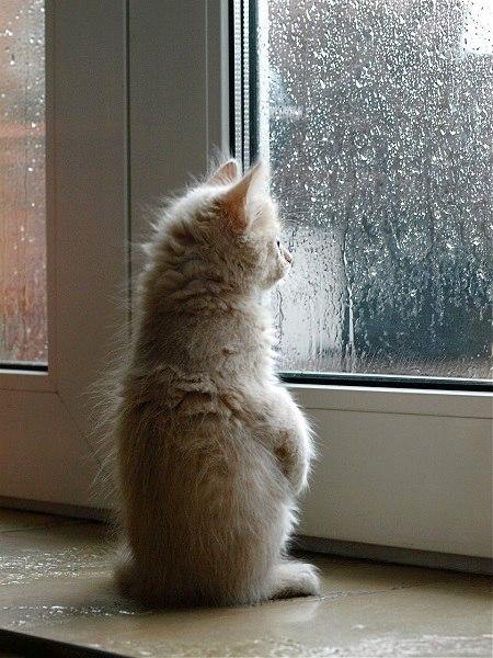 Этой ночью в Рыбинске ожидается пасмурная погода, небольшой дождь, тем