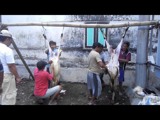 3 potong daging qurban IDHUL ADHA 2016 di desa JAMBU dusun Kedung Cangkring PARE KEDIRI