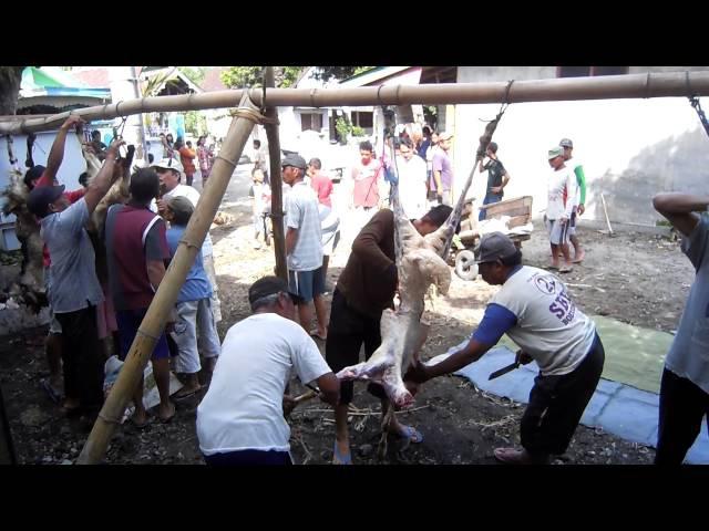 2 potong daging qurban IDHUL ADHA 2016 di desa JAMBU dusun Kedung Cangkring PARE KEDIRI