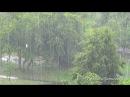 Дождь. Ливень. Гроза. Шум дождя. Звук дождя. Гром и дождь. Молнии.Проливной дождь.