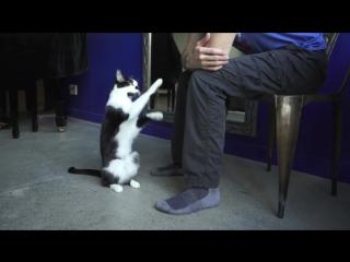 Позитивчик. Погладь кота! Остальное суета! (не забываем про звук)