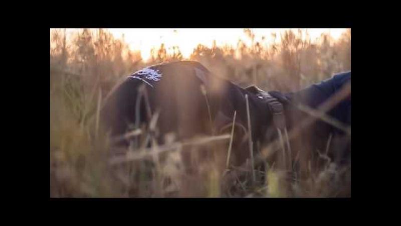 Jason Derulo Wiggle feat Snoop Dogg PARODY
