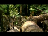BBC - Walking With Dinosaurs Ep5 Spirits Of The Ice Forest  - ArabHD.net
