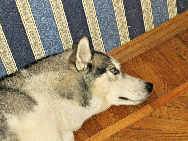 Как парен лижыт на кровати и к нему лех гамасек видио фото 524-973
