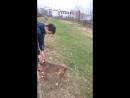 Хач трюкач vs. Адский Пёс