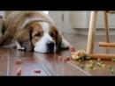 Fat Dog - Мотивация! Нет ничего невозможного