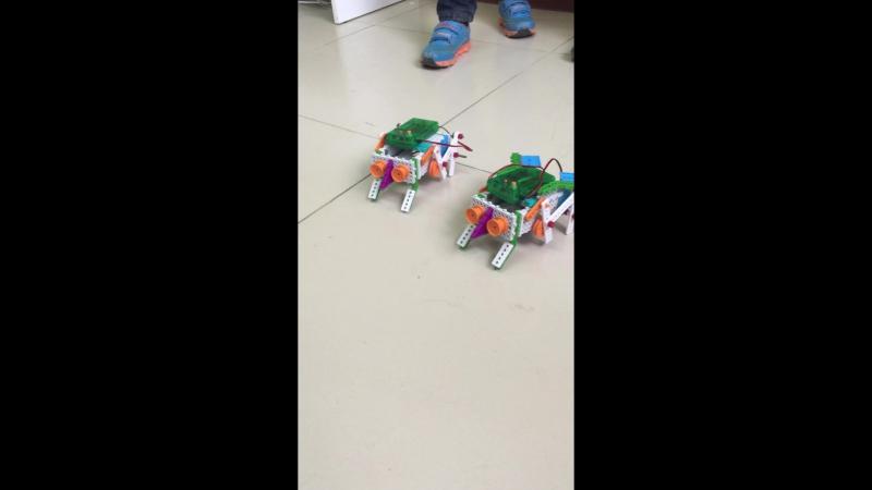 Танцы жуков-роботов