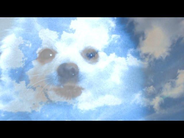 Пёс Гейб - Житие мое | RIP Gabe the Dog