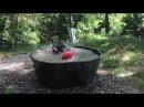 Black bear Takoda cools down
