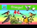 Изучаем птиц. Развивающий мультик для детей. Учимся говорить