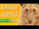 Южная Африка: дикая природа и животные Южной Африки | South Africa wildlife