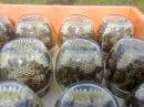Сотовый мёд в банках .