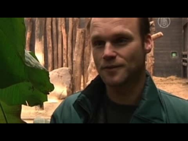 Видеокамера зафиксировала рождение слонёнка