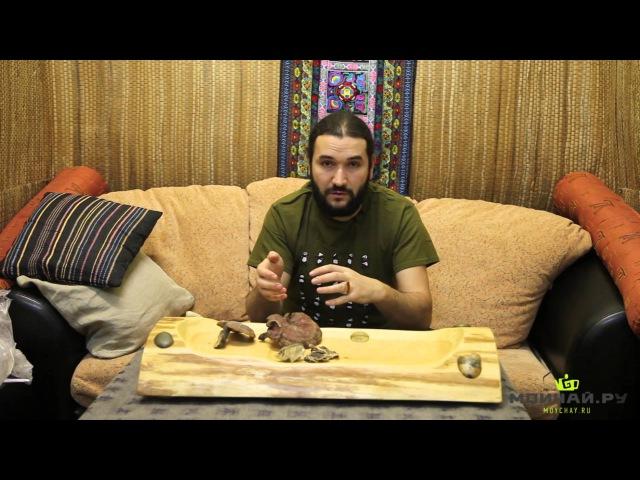 Про гриб Линчжи (Ganoderma lucidum)