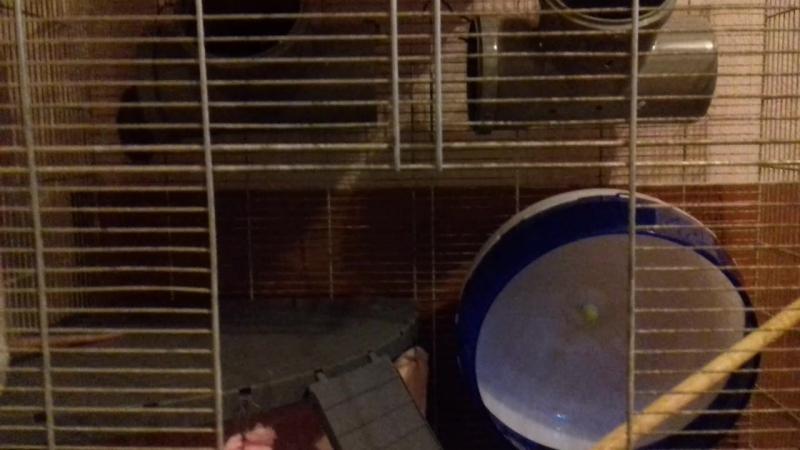 Крысо стайка 😊