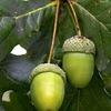Фитория-натуральная растительная продукция
