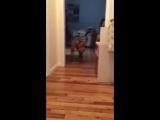 Собакен боится разбудить другана