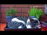 Как отучить кота гадить