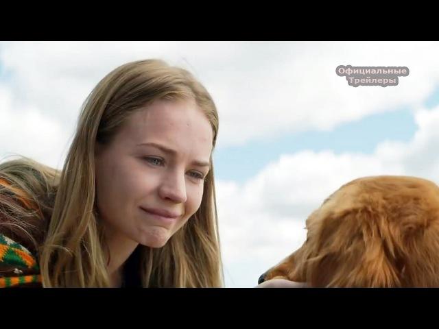 Трейлер потрясающего фильма Собачья жизнь 2017