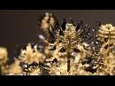 Цветущие кинетические скульптуры от Кейси Каран Casey Curran