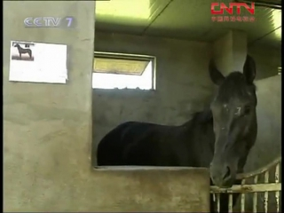 Коневодство ''Ма Дэ Сыян Цзишу'' - древнейшая технология разведения лошадей ''Ма''.