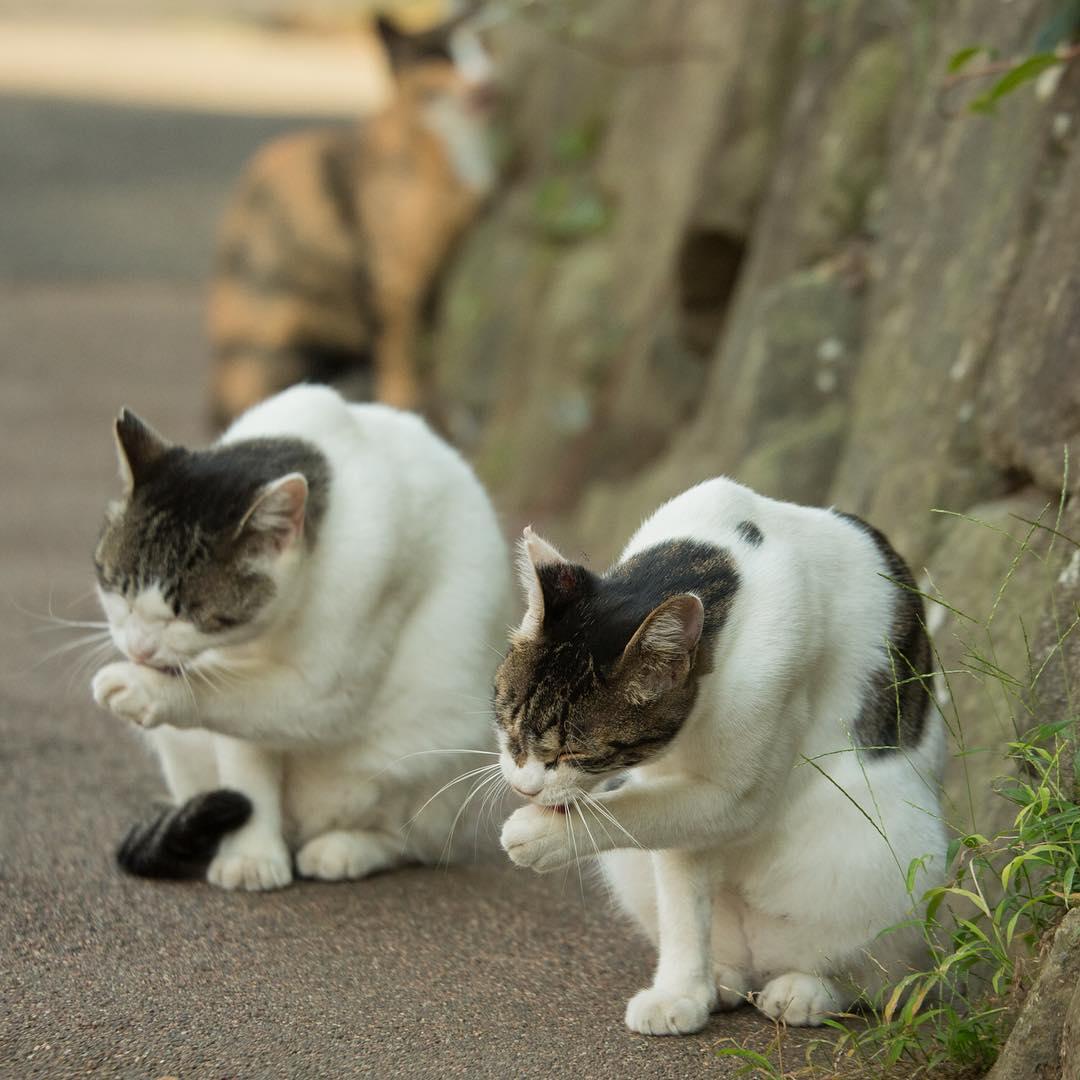 cat bladder location