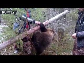 Охотники спасли медвежонка из капкана