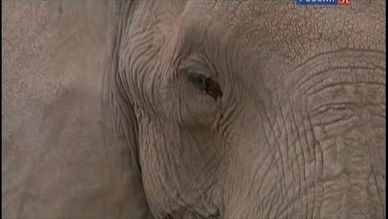 BBC Африка / Africa 02.Саванна (2013)