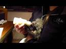 Bottle-feeding Mireya, the orphaned fox kit