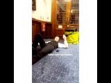 Instagram video by Tom Holland Updates Jan 13, 2017 at 314pm UTC