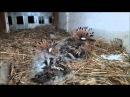 Hoopoe Nest (HD) V1 - Part 2 of 2