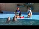 Дельфинарий в Архипо Осиповке 2016 год