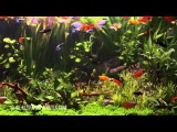 Aquarium 4K The Beautiful South American Aquarium