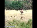Когда на лето тебя отправили в деревню, а там кроме коров никого