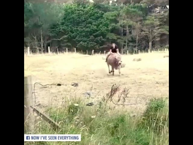 Когда на лето тебя отправили в деревню, а там кроме коров никого:()
