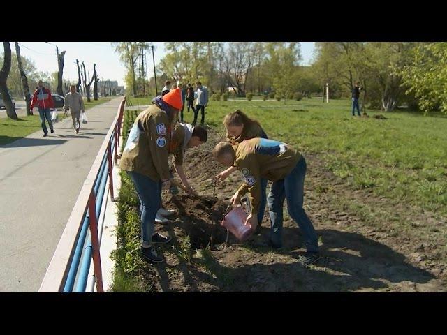 Возле БТИ появилось около сотни новых деревьев (новости Бийска, 28.04.16г., Будни)