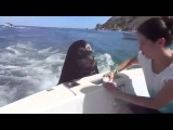 Cute seal feeds on a boat