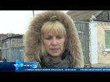 В Самарской области уничтожаютцелые пологовья свиней, зараженных африканской ч...