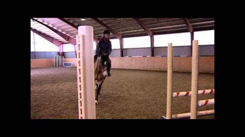 Träning Byta galopp - We Love Horses