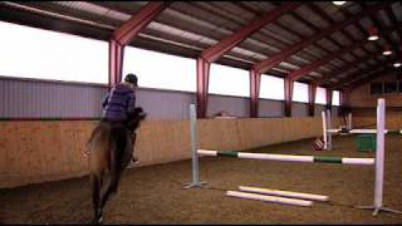 Träning Lydnat och Rytm - We Love Horses