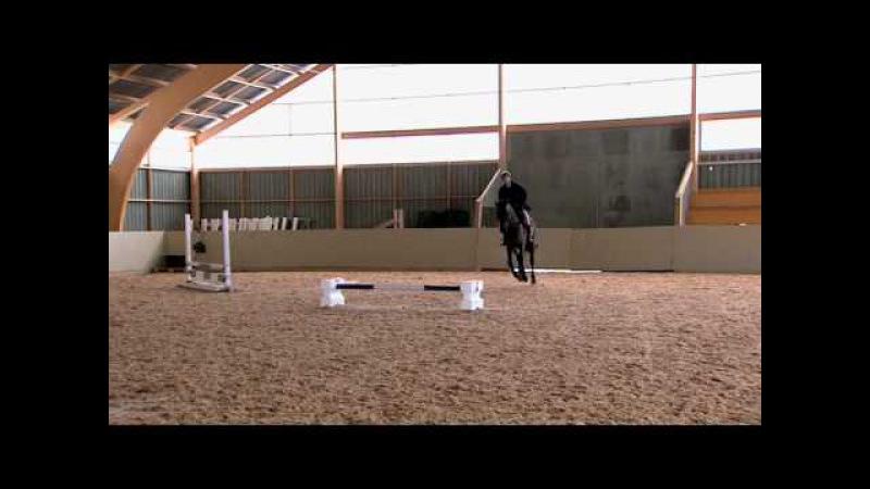 Träning Hålla en jämn rytm efter hinder - We Love Horses