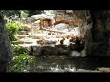 Зоопарк. Обезьяны